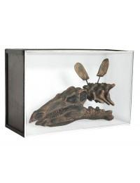 Dinosaurier Fossil Stegosaurus in Schaukasten