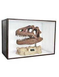 Dinosaurier Fossil Allosaurus auf Ständer in Schaukasten