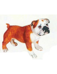 Bulldogge stehend