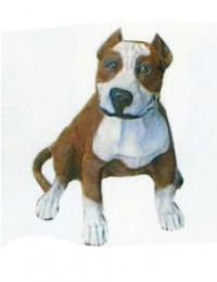 Pitbull Kampfhund braun weiß
