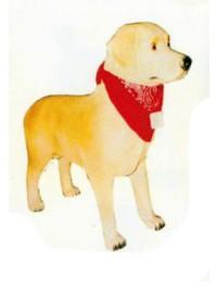 Labrador stehend mit Halstuch