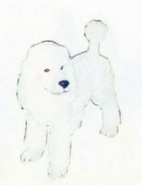 weißer Pudel