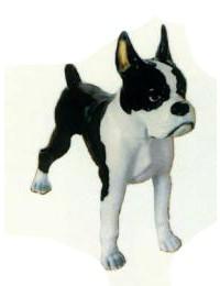 Boston Terrier stehend schwarz weiß
