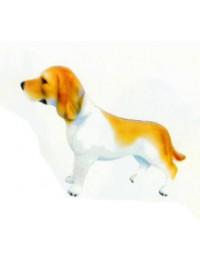 Beagle braun weiß