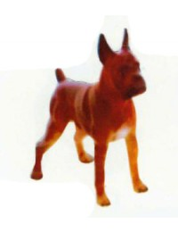 Boxer Kampfhund stehend