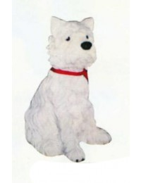 West Highland Terrier sitzend