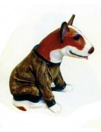 Kampfhund Bullterrier sitzend mit Pullover