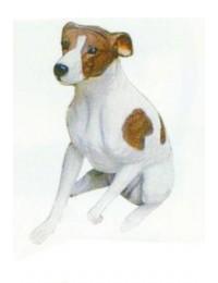 Beagle sitzend