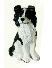 Border Collie sitzend
