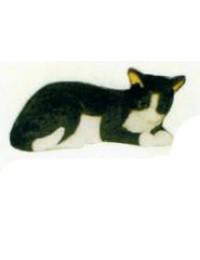 schwarz weißes Kätzchen