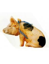 geflecktes Schweinchen