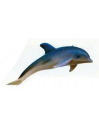 Delfin schwimmend