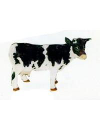 kleine weiß schwarze Kuh