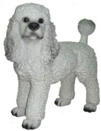 Hund, weißer Pudel