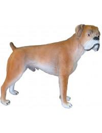 Hund, Boxer