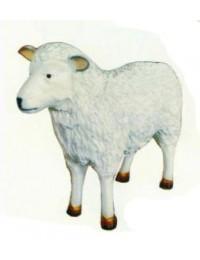kleines Schaf Kopf grade