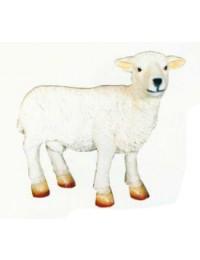 kleines wolliges Schaf