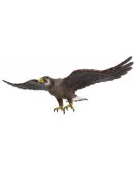 Goldener Adler fliegend Angriffsposition