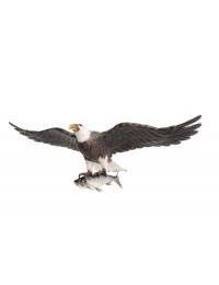 Weißköpfiger Adler fliegend mit Fisch