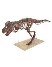Dinosaurier Tyrannosaurus Skelett antik