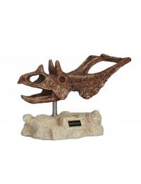 Dinosaurier Chasmosaurus auf Stein