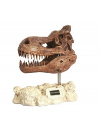 Dinosaurier Tyrannosaurus auf Stein