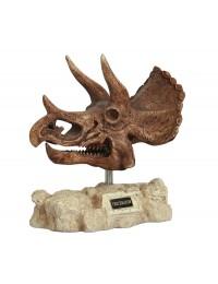 Dinosaurier Triceratops auf Stein