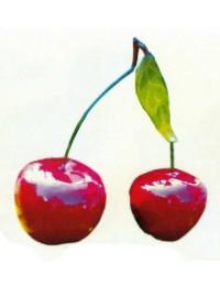 rotes Kirschenpaar groß