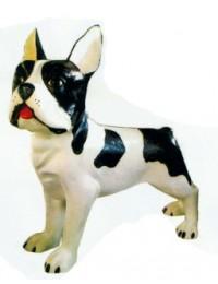 Boston Terrier XXXL weiß schwarz