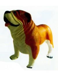 Englische Bulldogge XXXL braun weiß