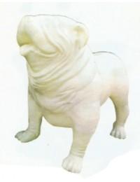 Englische Bulldogge XXXL weiß