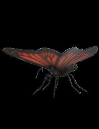 XXL Schmetterling