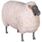 Schaf mit schwarzem Kopf klein