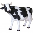 Kuh klein Kopf oben