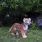 Tigerbaby laufend