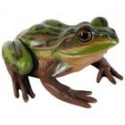 Grüner und goldener Frosch