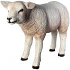 Lamm Wollschaf stehend