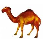 stehendes Dromeda Kamel