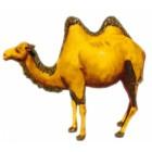 Kamel mit zwei Höckern