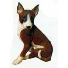 brauner Hund sitzend