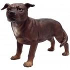 kleiner Pitbull Kampfhund