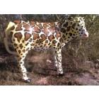 Designerkalb  Giraffenmotiv