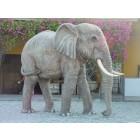 Elefant lebensgroß Rüssel unten