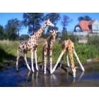 Giraffen 3er Gruppe
