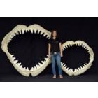 Großer Weißer Hai Gebiss Mittel