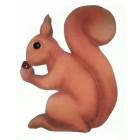 Großes Eichhörnchen mit Nuss