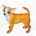 Chihuahua stehend
