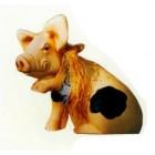 geflecktes Schweinchen hebt Pfote