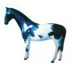 geflecktes Pferd schwarz weiß