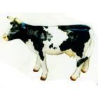 mittleres schwarz weiß gefleckte Kuh